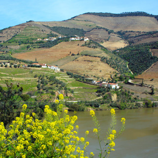 Weinberge am Douro (Foto: © Claudia Huldi / PIXELIO)