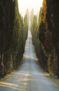 Eine lange Zypressenallee im Morgenlicht.