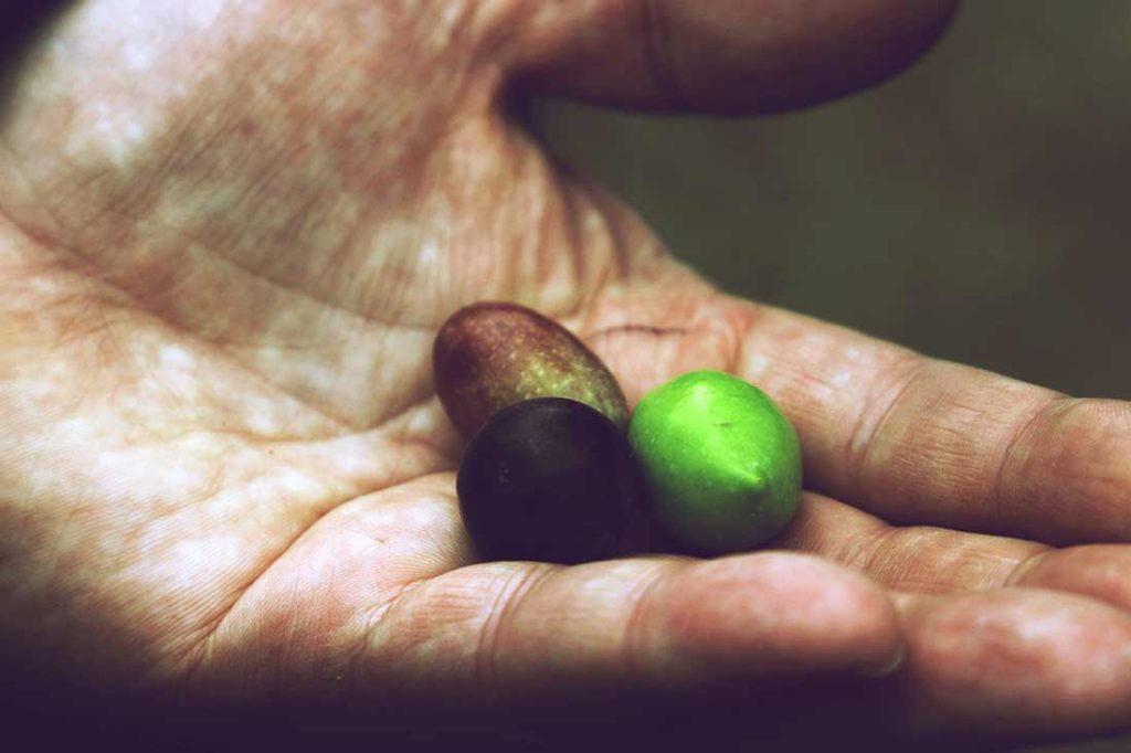 Drei Oliven in einer Hand