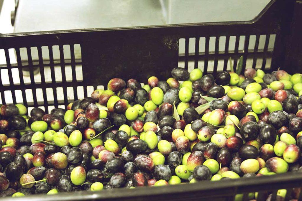 Grüne und schwarze Oliven in einer Kiste