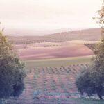 Olivenöl-Tourismus in Andalusien: auf den Spuren des grünen Goldes