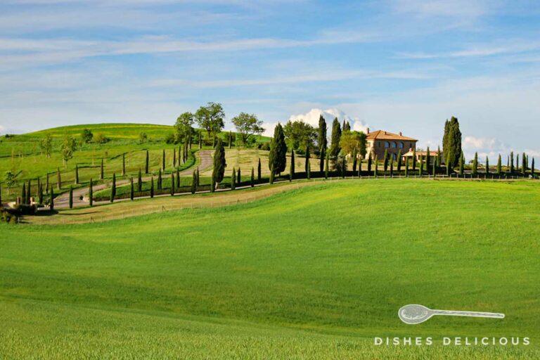 Foto von einer Toskana-Landschaft. Eine mit Zypressen gesäumte Straße schlängelt sich durch Wiesen zu einem Landhaus.