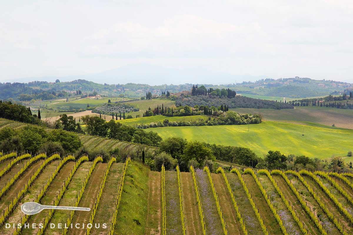 Landschaftspanorama mit Weinreben