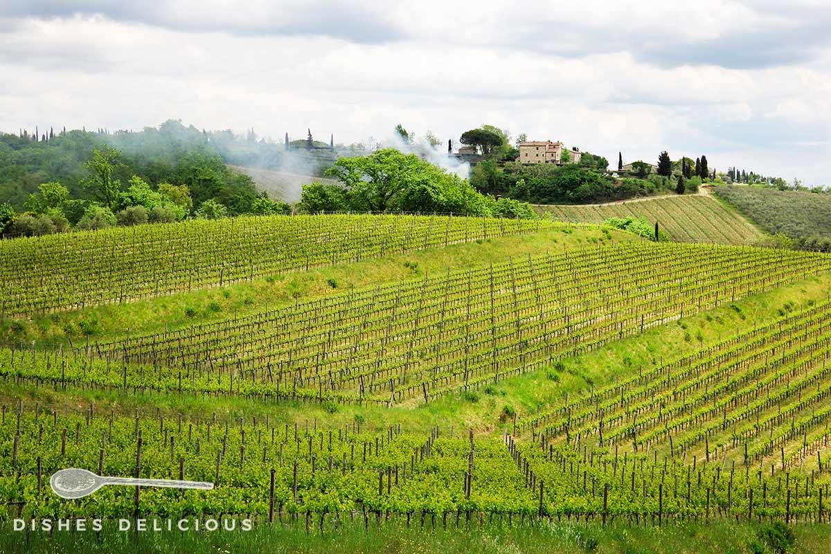 Eine Landschaft voller Weinreben in der Toskana.