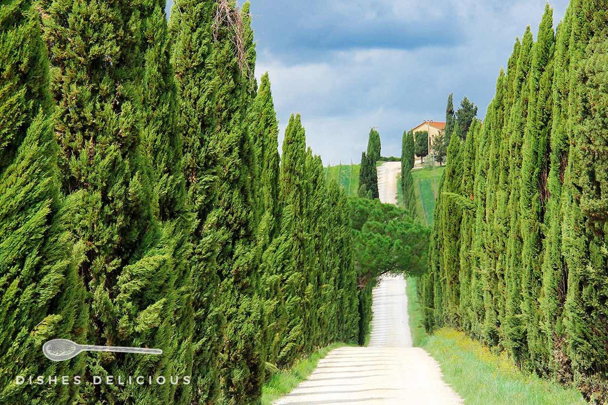 Eine Zypressenallee im Chianti.