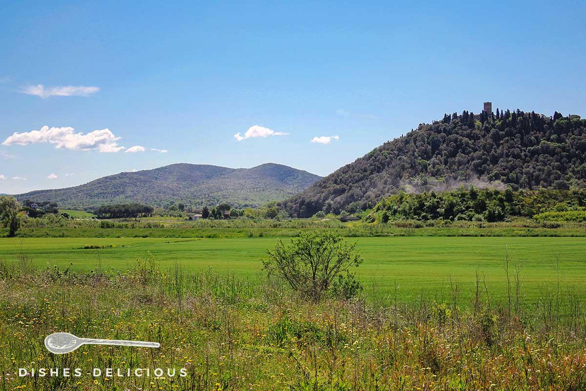 Foto von einer grünen Landschaft in der Maremma, auf einem Hügel erkennt man den Turm des Castello Marsiliana.