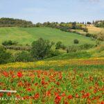Toskana-Reisebericht: Von Grosseto bis Castiglione - die nördliche Maremma