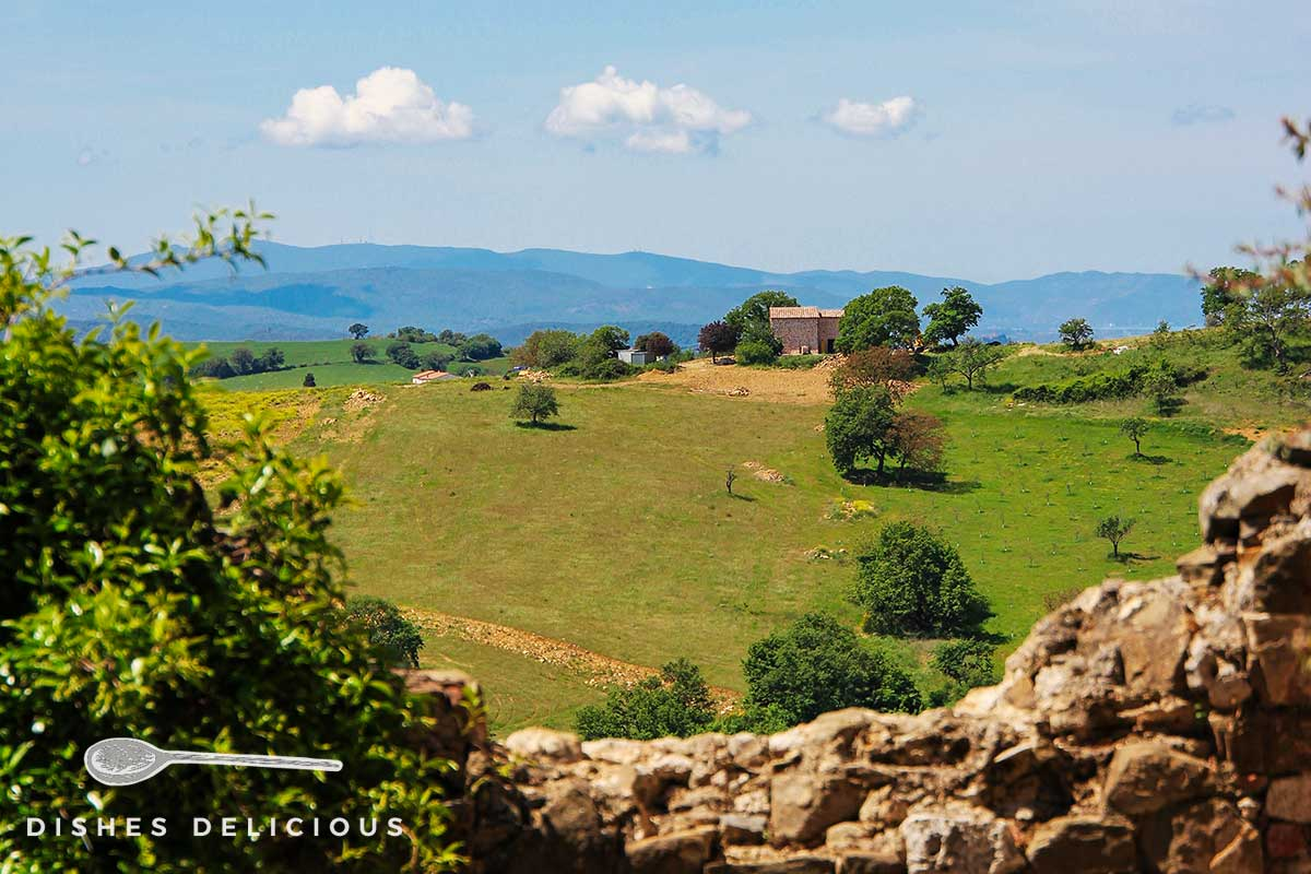 Foto von der grünen Landschaft mit vereinzelten Bäumen rund um Montemerano.