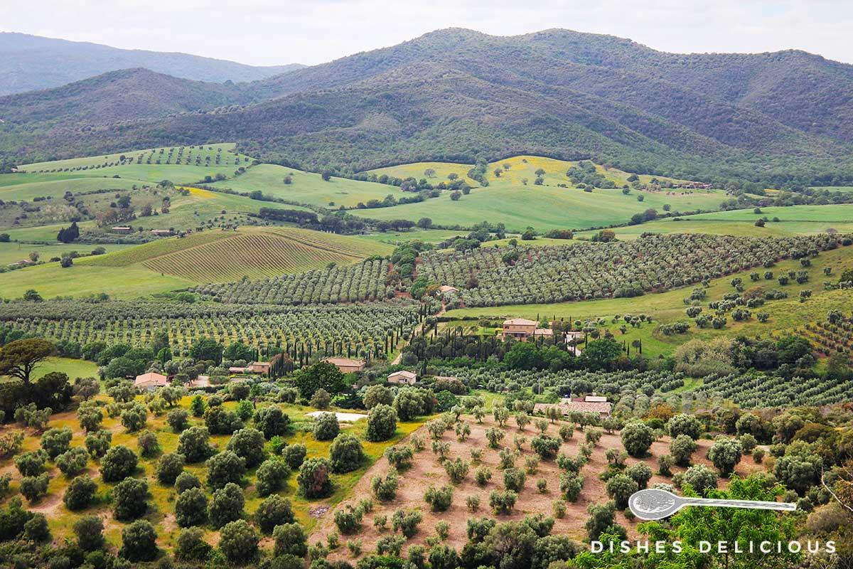 Foto von einer Landschaft in der Südtoskana: im Hintergrund bewaldete Hügel, im Vordergrund ordentlich angelegte Olivenhaine.