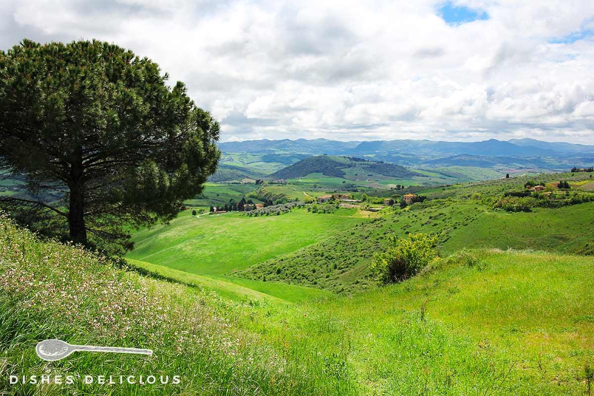 Foto der weitläufigen Landschaft des Val d'Elsa mit grünen Wiesen und Hügeln.